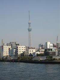 Sky Tree - Hommage an die japanische Ästhetik im Alltag und einfach umsonst...