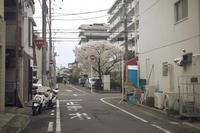 今年の桜 - IN MY LIFE Photograph