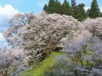 桜 28奈良県 - ty4834 四季の写真Ⅱ