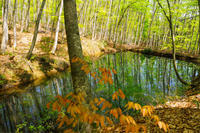 新緑の美人林、その1 - 松之山の四季2