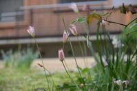 ブログ再開ーガーデンメンテナンス記録日記としてー - Healing Garden  ー草庭ー