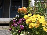 Sweet Garden - Wonderful-Days