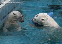 2020年2月天王寺動物園その7 - ハープの徒然草