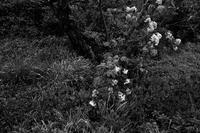 時々雨が落ちてくる、気温8℃ - Yoshi-A の写真の楽しみ