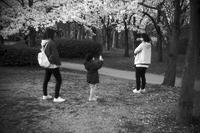 櫻2020#57絶景の櫻があるとすれば#2320200407 - Yoshi-A の写真の楽しみ