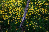 春の花咲く石山寺 - 花景色-K.W.C. PhotoBlog