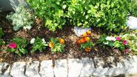 お庭のお花を植え替えました!(長丁場を楽しむ②) - ほっこりぐらし