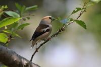近くの公園にて!! - 季節の鳥達