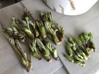 この時期は畑も忙しいけど、やっぱりあれが… - 家庭菜園ニストabuさん家の美味あれこれ