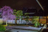 2020京都桜~妙顕寺ライトアップ - 鏡花水月