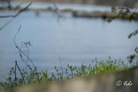 川沿い散歩 / strolling along the river - Seeking Light - 光を探して。。。