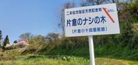 4月25日願いのドライブ/片倉のナシの木@福島県二本松市 - 963-7837