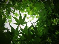 新緑の季節 - 音舞来歩(IN MY LIFE)