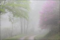 濃霧 - 薫の時の記憶