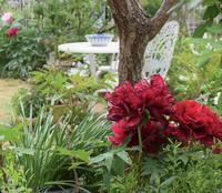 Roses & Pionies - バラとハーブのある暮らし Salon de Roses