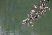 桜湖面 - 風の彩り-2