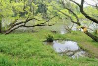 湧水のそそぐ池の端に - 里山の四季