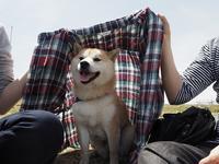 犬ヨーダ - カメラノチカラ