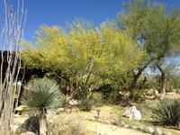 砂漠の木々とサボテン - 夢と現実の狭間