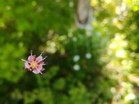 花ぶらんこ… - 侘助つれづれ