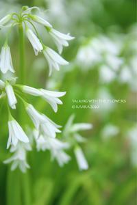 * 白い花 - Kaara's Eye