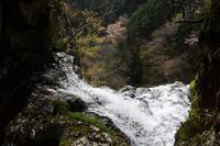 琵琶滝に咲く桜下多古川本谷 - 峰さんの山あるき