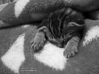 猫のいる暮らし - 好きな「こと」「もの」メモ
