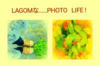 smartphone    photo ❗ - LAGOMな……PHOTO   LIFE !