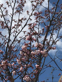 桜前線♪ - 笑う門には福来たる