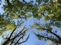自然と共に - sawako blog