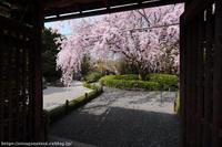 禅のこころ 妙心寺 退蔵院 - はんなり京都暮らし