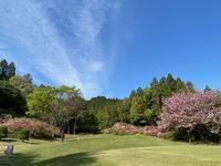 つつじの花 - アカネ73.6