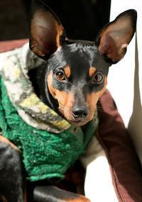ステイホーム - いとしい犬たちのフォトブログ