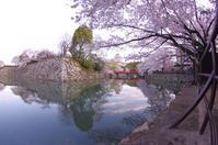 桜のお城散策(2020/4/5)其の① - 南の気ままな写真日記