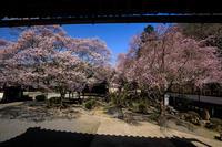 2020桜咲く奈良 青空の本善寺(前編) - 花景色-K.W.C. PhotoBlog