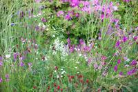 季節を感じる花壇 - 写真の記憶