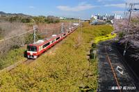 開催期間短縮 『三浦海岸桜まつり2020』 - 写愛館