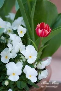 おとぎ話 - Flores*Flores