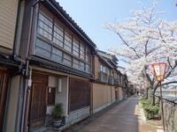 私の桜 2020~今日はお家でお花見!!~ - 日毎夜毎なブログ