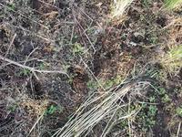 綿の種まきと、綿の木の利用法の話 - わたいとや 移転しました→ wataitoya.com