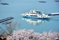 ☆私の桜2020☆ - できる限り心をこめて・・Ⅳ