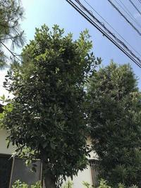 50メートル離れた家の庭にメジロはいた - 鎌倉・徘徊人
