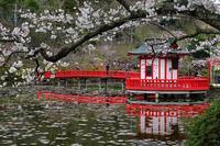 茂原公園の桜2020-05-15更新 - 夕陽に魅せられて・・・