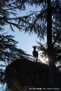 逆光 - 朝から晩まで動物園。(サファリもね)