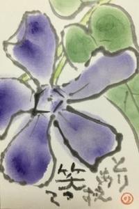 5月は花♪♪ - NONKOの絵手紙便り