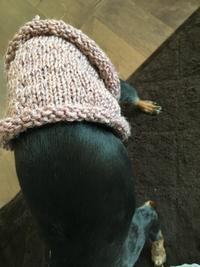 わんこの腹巻きセーター作りました。。♪ - 妖精と香りの庭