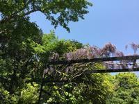 庭の記録5月 - my gallery-2