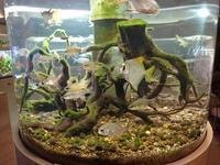 板橋区立熱帯環境植物館:マングローブの水辺~テンジクダイの仲間たち - 続々・動物園ありマス。