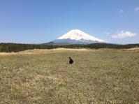 富士山麓@十里木高原からの富士山 - 小粋な道草ブログ