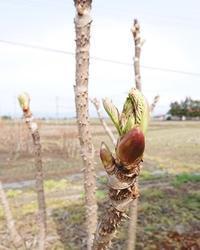 タラの芽とコロッケ - 十色記